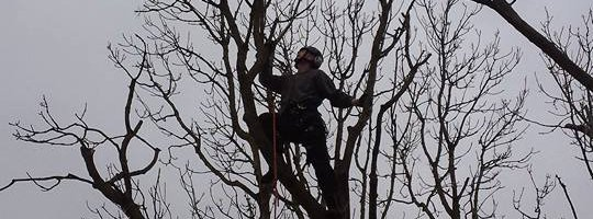 Bedfordshire Tree Surgery
