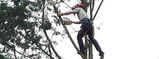 Hertfordshire Tree Surgeon