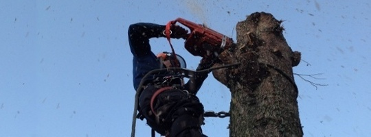 Tree Surgery Bedfordshire
