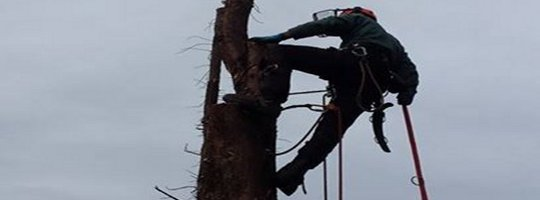 Hertfordshire Tree Surgery