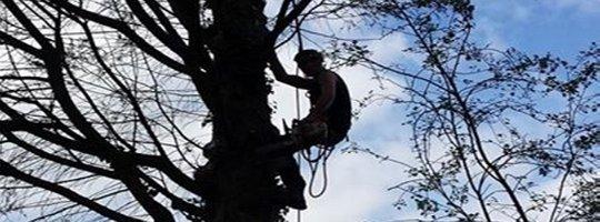 Bedfordshire Tree Surgeon