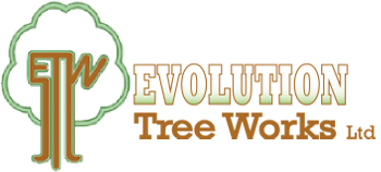 Evolution Tree Works Ltd